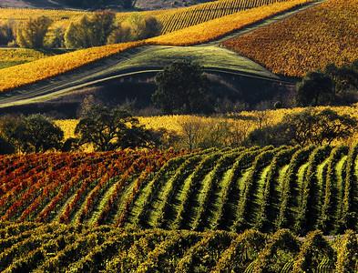 Wine country vineyards of all seasons